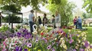 Reasons to attend a garden festival in Glasgow